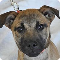 Adopt A Pet :: Timber - Atlanta, GA
