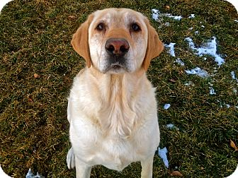 Labrador Retriever Mix Dog for adoption in Meridian, Idaho - Charlie