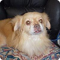 Adopt A Pet :: ALSAN - Cathedral City, CA