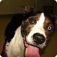 Adopt A Pet :: Kane - Norwich, NY