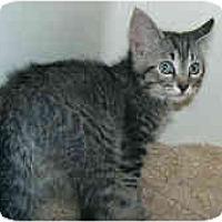 Adopt A Pet :: Wintermint - Dallas, TX