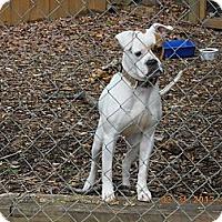 Adopt A Pet :: Sassy - Charlotte, NC