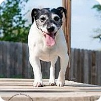 Adopt A Pet :: Bella - Omaha, NE