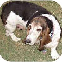 Adopt A Pet :: Millicent - Phoenix, AZ