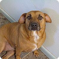 Adopt A Pet :: Peanut - Cottonport, LA