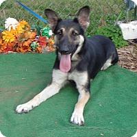 Adopt A Pet :: Jase - Dacula, GA