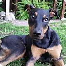 Adopt A Pet :: Weezy
