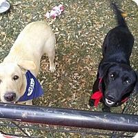 Adopt A Pet :: Laverne - Floresville, TX