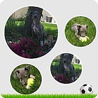 Adopt A Pet :: Smokey - Marlton, NJ