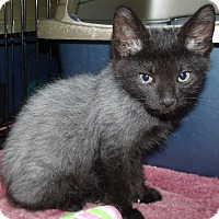 Adopt A Pet :: ALFA CENTAURI - Acme, PA