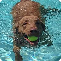 Adopt A Pet :: Jackson (Jax) - Phoenix, AZ
