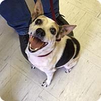 Adopt A Pet :: Precious In Kerrville, Texas - Austin, TX