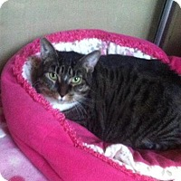 Adopt A Pet :: Allison -REDUCED ADOPTION FEE! - Howell, MI