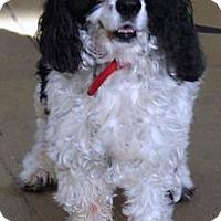 Adopt A Pet :: Daisy -Adopted! - Kannapolis, NC