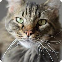 Adopt A Pet :: Portland - Colorado Springs, CO