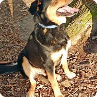 Adopt A Pet :: Rex - Russellville, KY