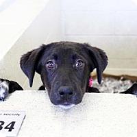 Adopt A Pet :: Maribeth - Atlanta, GA