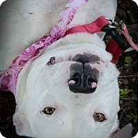 Adopt A Pet :: Dreama - Muldrow, OK