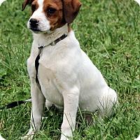 Adopt A Pet :: Zuri - Plainfield, CT