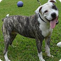 Adopt A Pet :: Maggie - Lafayette, LA