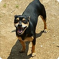 Adopt A Pet :: Bandit - Albany, NC