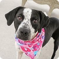 Adopt A Pet :: Maddie - Umatilla, FL