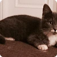 Adopt A Pet :: Clover - Cerritos, CA