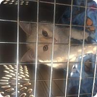 Adopt A Pet :: zz 'Guido' courtesy post - Cincinnati, OH