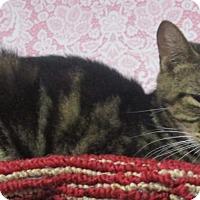 Adopt A Pet :: Grayson - Witter, AR