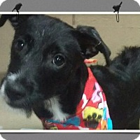 Adopt A Pet :: Kima - Mesa, AZ