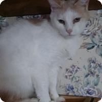 Adopt A Pet :: Bobbi - Witter, AR