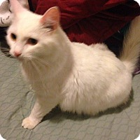 Adopt A Pet :: Murray  (I need a barn) - Muskegon, MI