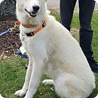 Adopt A Pet :: Flurry - Palatine, IL