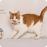 Adopt A Pet :: Dabby - Sherman Oaks, CA