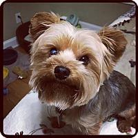 Adopt A Pet :: Freddie - Marietta, GA