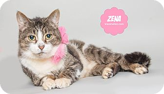Domestic Shorthair Cat for adoption in Wyandotte, Michigan - Zena