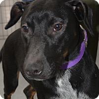 Adopt A Pet :: Blitzen - Ogden, UT