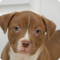 Adopt A Pet :: Albany - Long Beach, NY