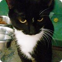Adopt A Pet :: Venus - Franklin, NH