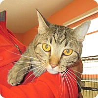 Adopt A Pet :: Kitty Kat - Reeds Spring, MO