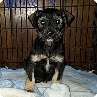 Adopt A Pet :: Mike - Niagra Falls, NY