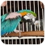 Photo 3 - Macaw for adoption in Vancouver, Washington - Willie