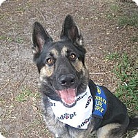 Adopt A Pet :: Koda - Green Cove Springs, FL
