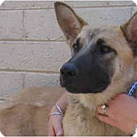 Adopt A Pet :: Juliet - Scottsdale, AZ