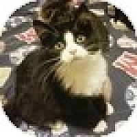 Adopt A Pet :: Randie - Vancouver, BC