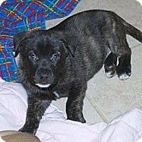 Adopt A Pet :: Milo - Minneola, FL