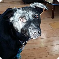 Adopt A Pet :: Michelle - in Maine - kennebunkport, ME