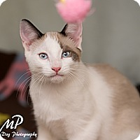 Adopt A Pet :: Casey - Fountain Hills, AZ