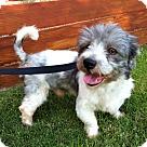 Adopt A Pet :: Isaiah