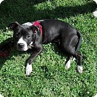 Adopt A Pet :: Corona - Medina, OH